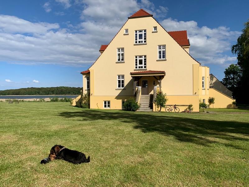 Hund im Garten von Gut Grubnow