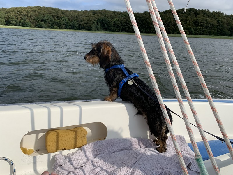 Hund in Grubnow auf dem Wasser