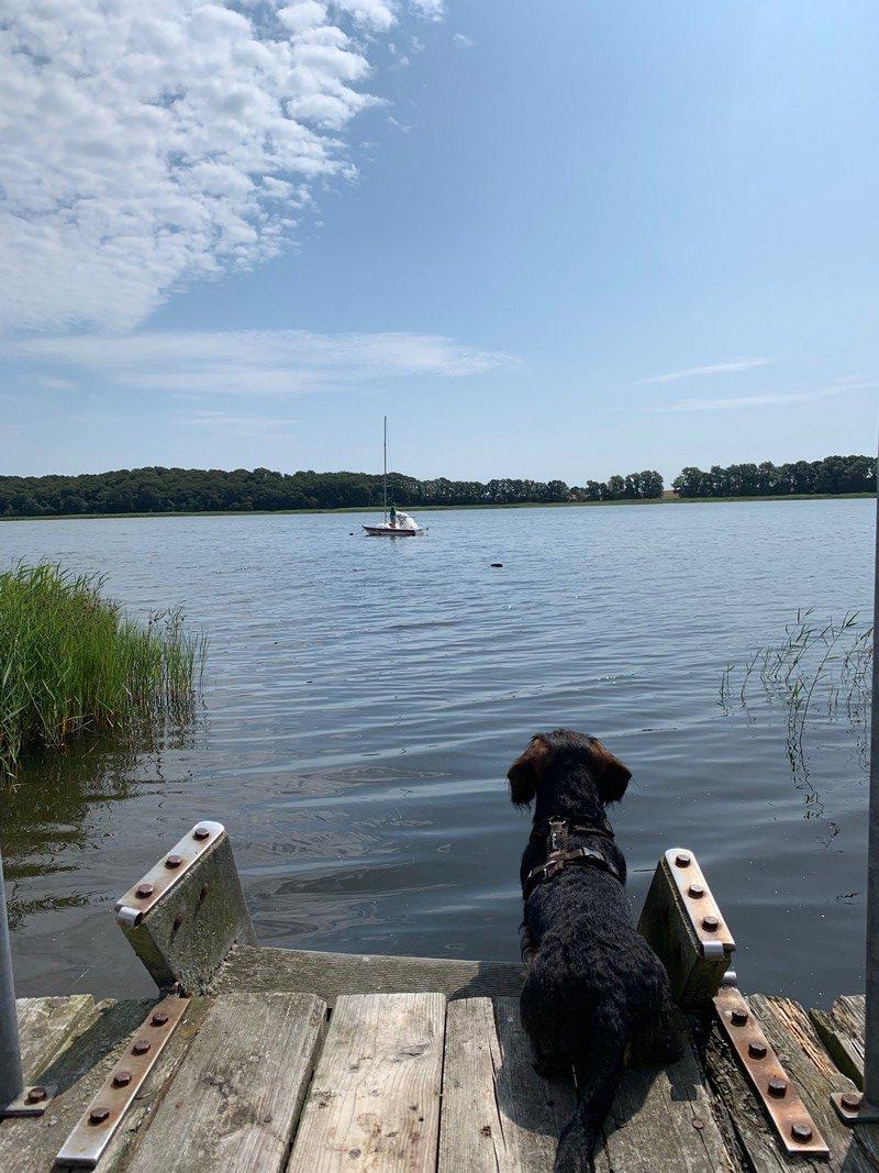 Hund auf Bootssteg Gut Grubnow