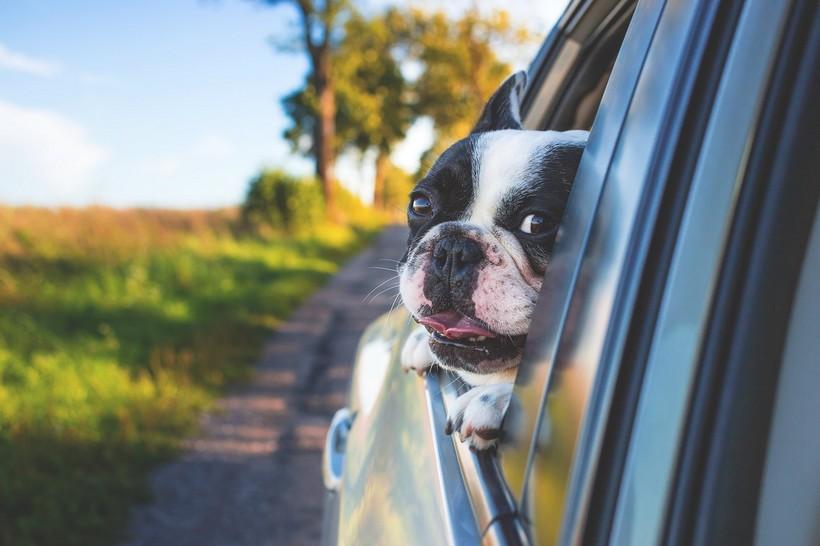 hund auto rügen
